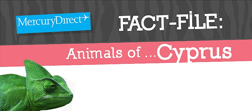 Animals of Cyprus Fact File