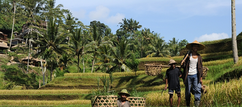 The contrasting cuisine of Bali