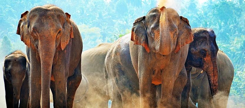 Animal Conservation in Sri Lanka
