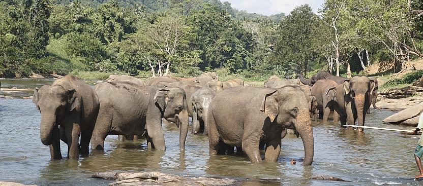 Animals of Sri Lanka - Fact File