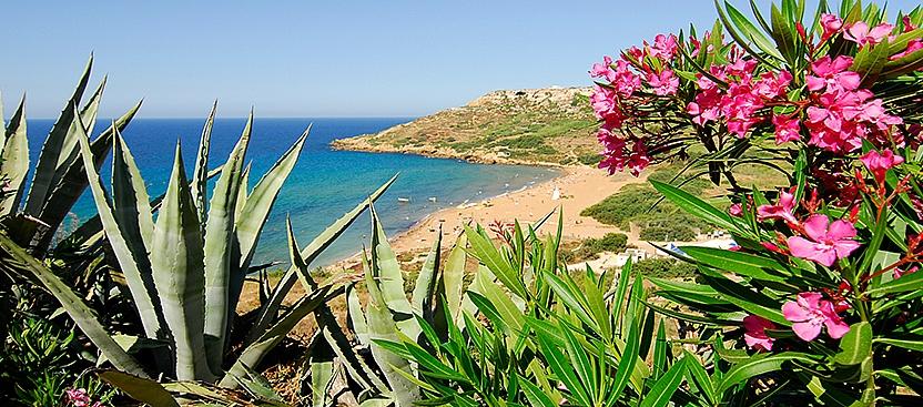 Wildlife Conservation in Malta