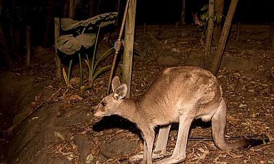 24 Hours in Cairns Australia