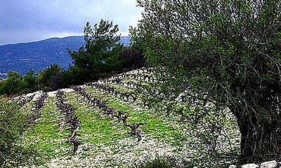 Wine of Cyprus